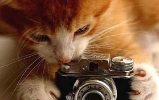 animal-photographer-5-cat-gazza