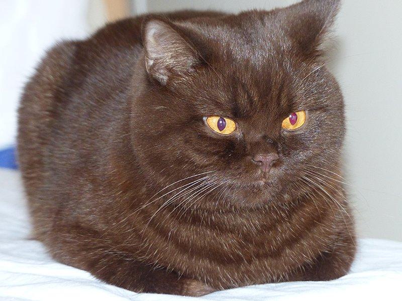 těsná kočička cam