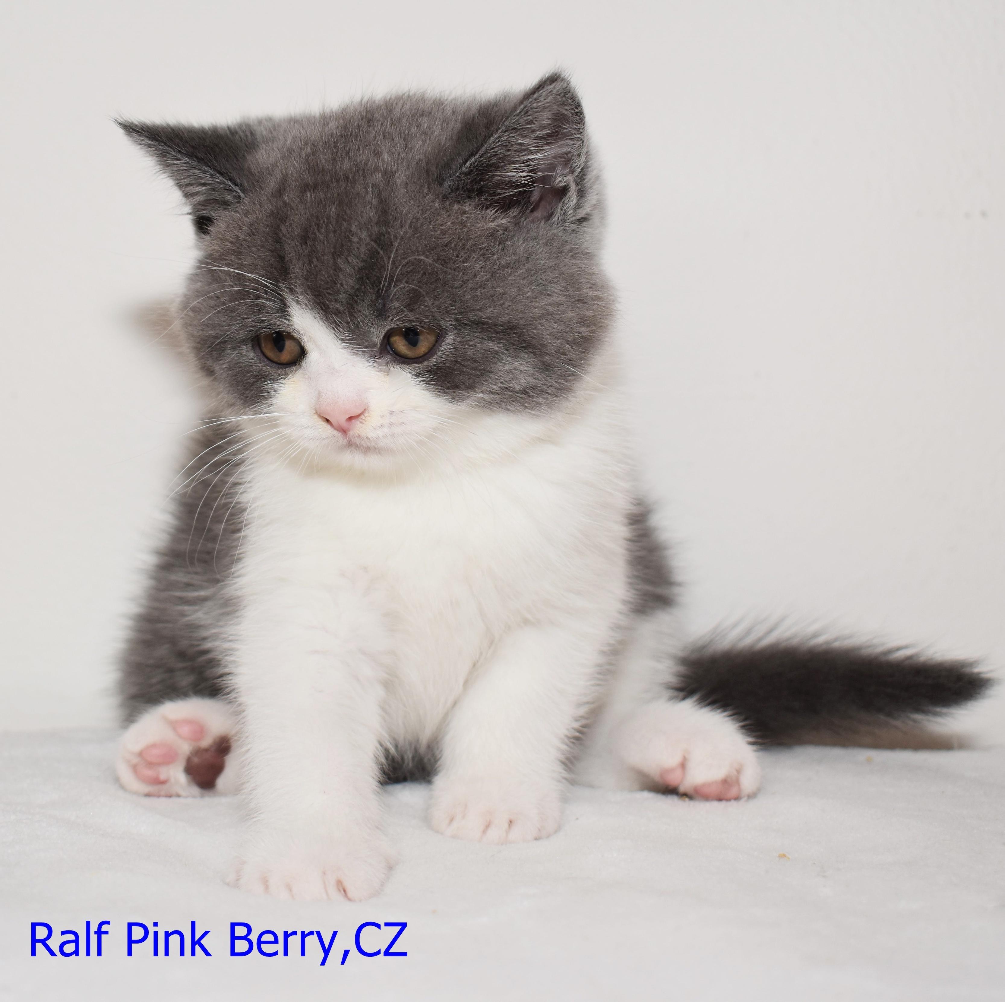 pinky kočička obrázky