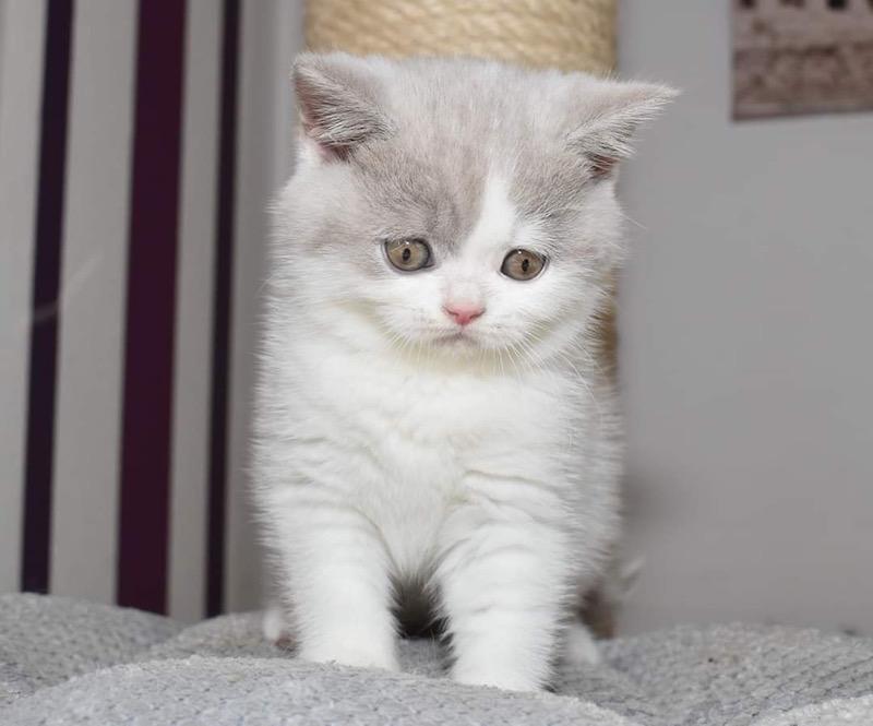 yong kočička